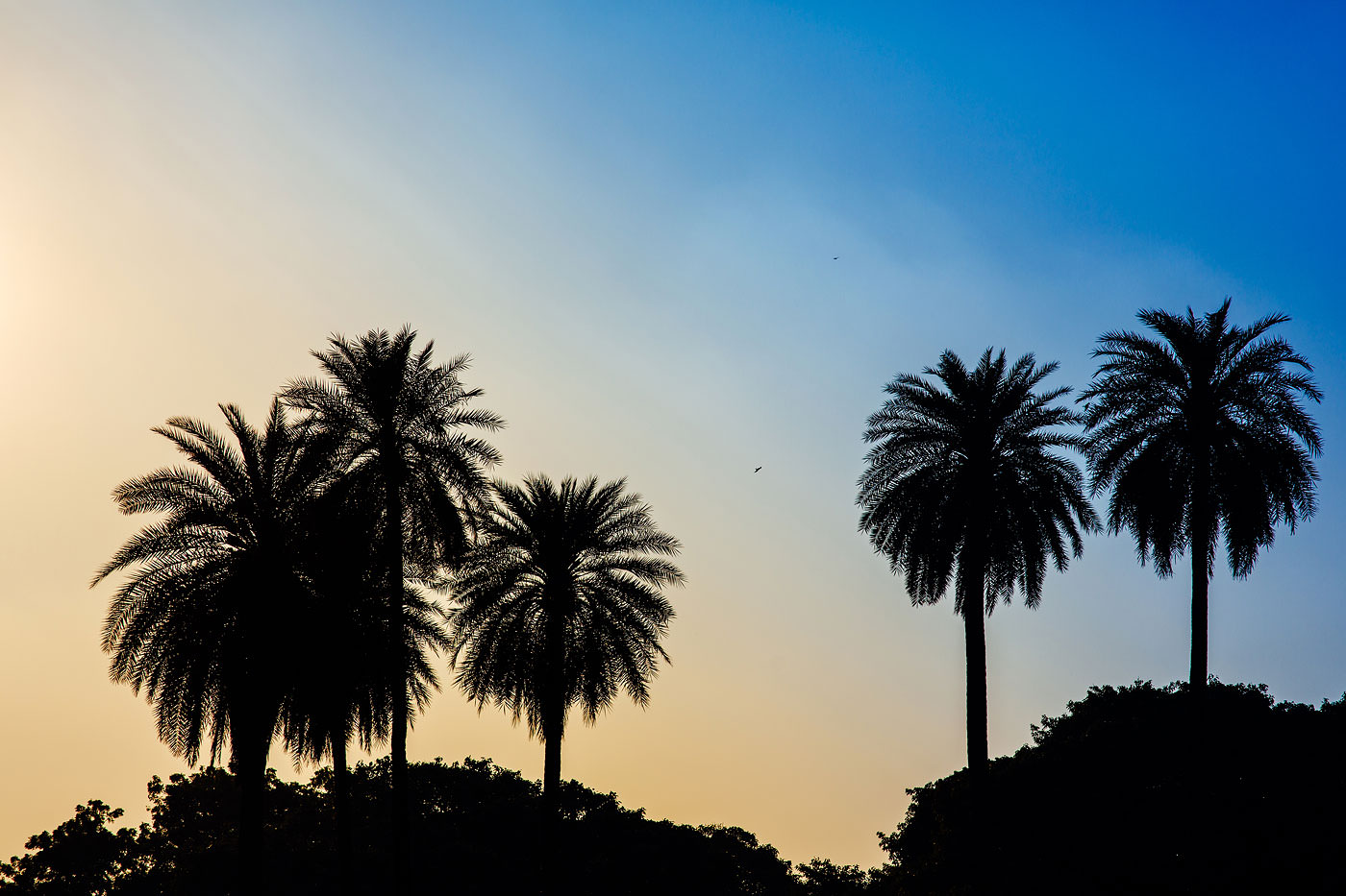 Delhi, India // 2014