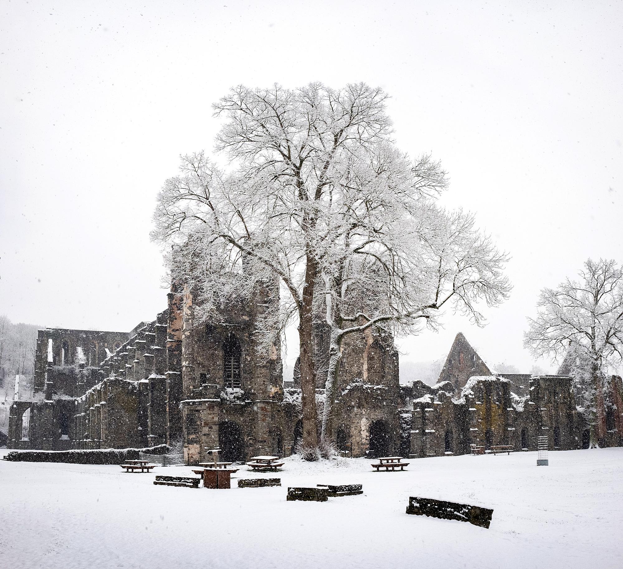 Abbaye de Villers-la-Ville // 2019